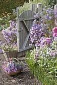 Offenes Gartentor im herbstlichen Bauerngarten