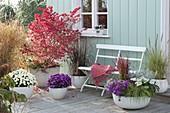 Herbstliche Terrasse mit Aster 'Purple Diamond' (Herbstastern)