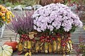Chrysanthemum (Herbstchrysantheme) und Calluna Garden Girls 'Susanne'