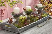Holz -Tablett mit Kerzen in Gläsern, Moos und Rosa (Hagebutten), Calluna