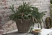 Korb mit Zweigen und Zapfen von Picea (Fichte), Strohroemer, Schere
