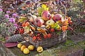 Herbstkorb gefüllt mit Äpfeln (Malus), dekoriert mit Blättern von Acer