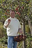Mann bei der Apfelernte