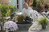 Mann bepflanzt graue Schale mit weissen Chrysanthemen