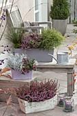 Holzkaesten mit Calluna vulgaris 'Pink Alicia', 'Rosita' und 'Angie'