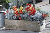 Holz-Kiste mit Griffen herbstlich bepflanzt : Physalis (Lampions), Helichrysum