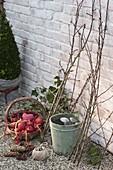 Vogelfutter-Baum aus Zweigen selberbauen