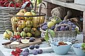 Frisch geerntete Zwetschgen (Prunus domestica) und Äpfel (Malus)