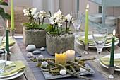 Tischdeko mit Mini-Phalaenopsis (Malayenblumen, Schmetterlingsorchideen)