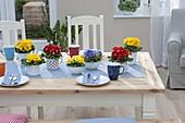 Tischdeko mit Primula acaulis (Primeln) in Müsli-Schalen und Emaille-Bechern