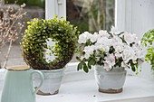 Rhododendron simsii (Zimmerazalee) in handgetoepferter Keramik