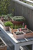 Bei milder Witterung dürfen Gemüse-Jungpflanzen zum Abhaerten