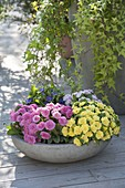 Graue Schale mit Primula 'Romance' , Belarina 'Buttercup Yellow' 'Amethyst Ice'