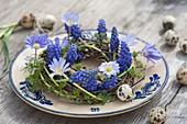 Tellerdeko mit Muscari armeniacum 'Blue Pearl' ( Traubenhyazinthen ) und Anemone blanda ( Strahlenanemonen ) an Kranz aus Betula ( Birke ) und Larix ( Laerche ), Ostereier