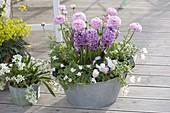 Zinkwanne rosa-weiss bepflanzt : Ranunculus (Ranunkeln), Hyacinthus