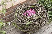 Kugeliges Nest aus Weide