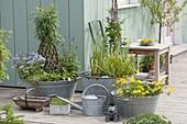 Alte Zink-Wannen als Mini-Teiche auf der Terrasse