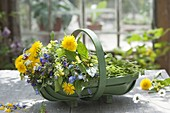 Korb mit frisch geschnittenen Wildblumen : Taraxacum (Löwenzahn)