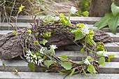Maiengruen : Kranz aus Zweigen von Betula (Birke), dekoriert mit Blüten