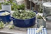 Blauer Emaille-Topf mit getrockneten Teekraeutern : Blätter von Brombeere