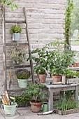 Terrasse mit Kräutern und Gemuesepflanzen