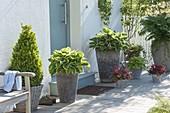 Hohe Töpfe mit Blattschmuckpflanzen am Eingang