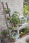 Terrasse mit vorgezogenen Jungpflanzen und Kräutern