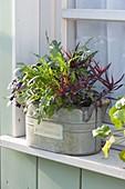 Zink-Jardiniere mit Kräutern am Fenster