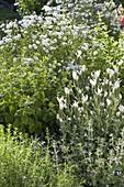 Weisses Beet mit Zitronenmelisse (Melissa), Achillea ptarmica 'Gypsy White'