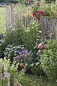 Sommerbeet mit Stauden und Rosen am Zaun