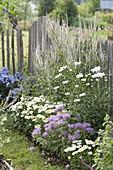 Staudenbeet am Gartenzaun : Veronicastrum virginicum 'Diana'