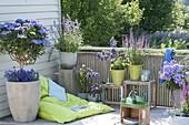 Blauer Balkon mit Sitzsack : Hydrangea 'Blaumeise' (Hortensien - Stamm)