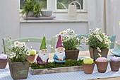 Kleine Holz-Töpfe mit Argyranthemum frutescens (Margeriten)