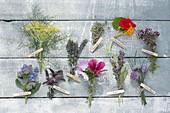 Tableau mit essbaren Blüten von Kräutern