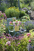 Stuhl mit frisch geschnittenen Rosa (Rosen) in Blechdose und Lavendel