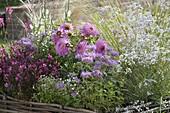 Rosa - weiss bepflanztes Beet mit Einfassung aus Haselruten