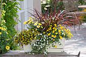 Kasten mit Balkonblumen und Gras bepflanzt