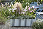 Hellblauer Holzcontainer auf Kiesterrasse : Lavatera trimestris 'Pink Blush'