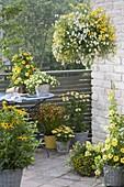 Gelb - weiss bepflanzter Balkon : Nemesia Sunsatia 'Little Banana' 'Little Coco