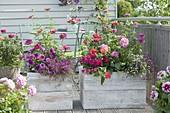 Balkon mit bunt bepflanztem Sichtschutz aus selbstgebauten Holzkaesten