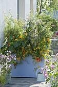 Hoher Kunststoff-Kasten mit essbaren Blüten als Sichtschutz