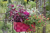 Roter Flechtkorb statt Balkonkasten am rostigen Gartenzaun : Calibrachoa