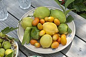 Frisch gepflueckte Zitrusfrüchte auf Keramik-