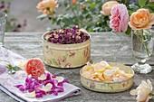 Duftende Blütenblätter von Rosa (Rosen) abzupfen und für Tee