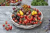 Verschiedene Tomaten - Sorten im runden Korb