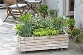 Fahrbarer Kasten mit Gemüse und Kräutern