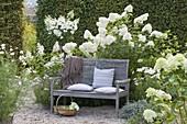 Schattiger Sitzplatz auf Holzbank am weissen Beet mit Hydrangea