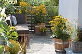 Lounge-Ecke zwischen gelben Blüten : Rudbeckia fulgida 'Goldsturm'