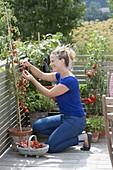 Frau erntet Tomaten auf dem Balkon