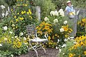 Sitzplatz am weiss-gelben Beet : Hydrangea paniculata 'Limelight'